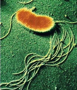 Tackling bacterial growth: pseudomonas